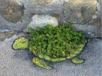 Turtle- Street Art
