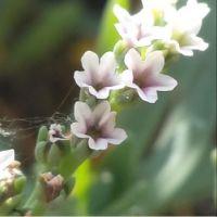 Flowers and Gossamer