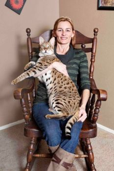 World's tallest cat..'Trouble'...