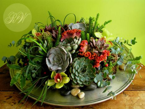 A rich 'succulent garden' for the tabletop