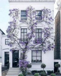 house with purple