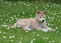 my friend Kathy's pup