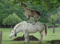 Koník kamarád