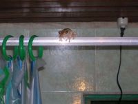 Frog in the shower
