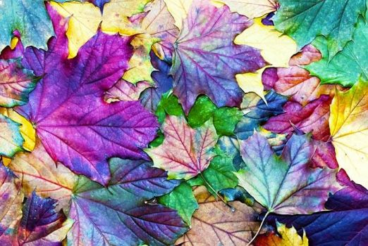 leaves of color