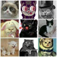 multi ~ cats