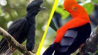 Beautiful Birds - No 43