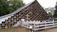 Amish wall of squash