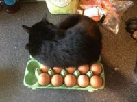 More proof that cats lay eggs.