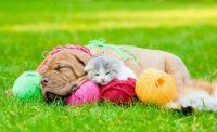 Kitten and a Puppy Sleeping