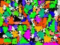 Wild Confetti - Small