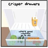 Crisper Drawers
