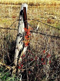 South Dakota Harvest time