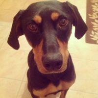 Hello Puppy Dog!