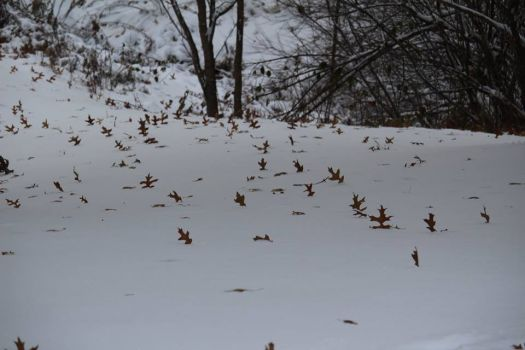 leaves protest early snowfall