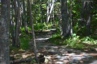 Returning through the woods.....