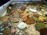 Tidal pool at the kids' museum