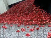 Poppies Wave  (4)