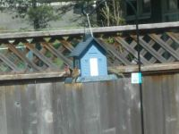 The Birds Are Already Enjoying Our New Birdhouse!