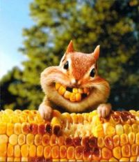 squirrel & corn