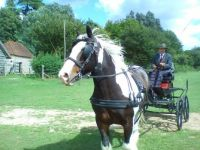 Horse drawn carriage, Weald and Downland Museum