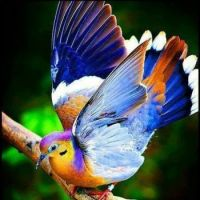 Beautiful Birds ~ 2