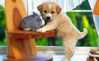 Creature Love