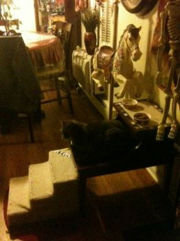 Cats dining room table
