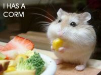 hamster and his corn