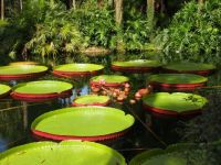 Bok Tower Garden, Florida
