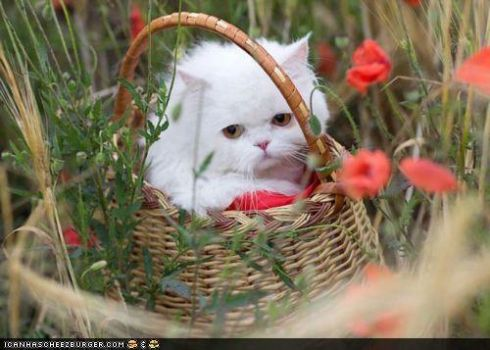 Where are we going, and what am I doing in this basket?