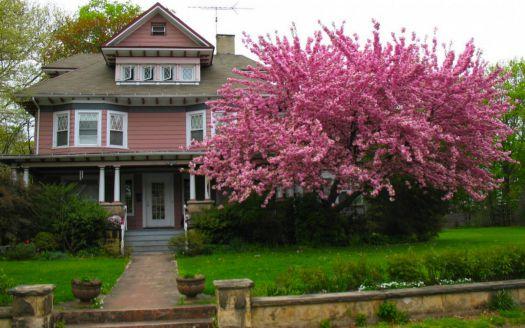 Pink Victorian with Cherry Tree