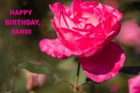 Happy Birthday, Sandi  (SandiT)