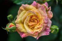 flower-6318951_960_720
