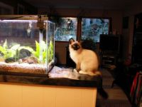 Theme - Dogs, cats, and small pets - Feline ichthyology