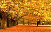 THEME:- Colours of Fall