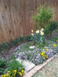 Helens back flowerbed
