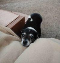Let me up please