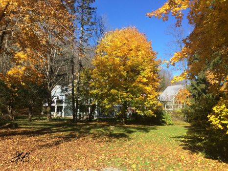 Fall Ellicottville