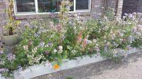 Northwest Wildflowers