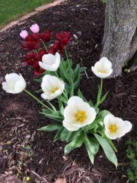 Wisc flowers