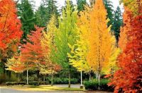 THEME: Colors of Fall