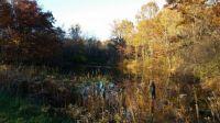 autumn pond in Ohio