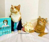 Cat Icon Game #41 - please identify!
