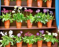 shelved flower pots