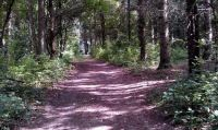 A familiar path in the woods