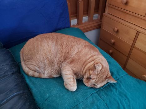 Papaya on Hairy Cushion 2019