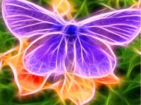 Electric Butterfly