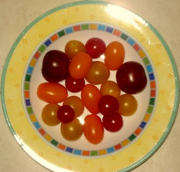 tomatoes (smaller)