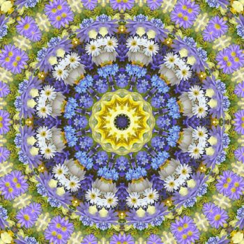 kaleidoscope 319 daisies 2 medium
